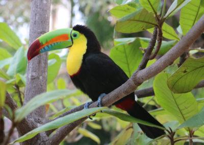 2017 COLOMBIA 1276 Cartagena de Indias Ene le hotel Caribe